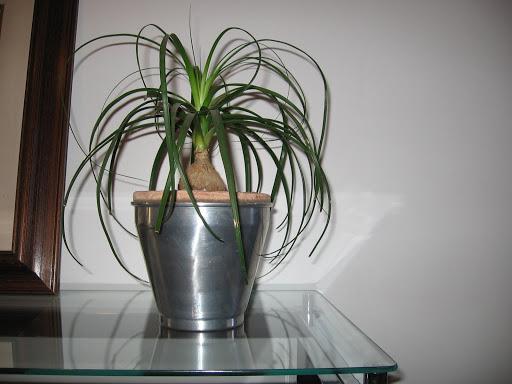Feng shui p gina 2 paisagismo legal for Plantas para interiores feng shui