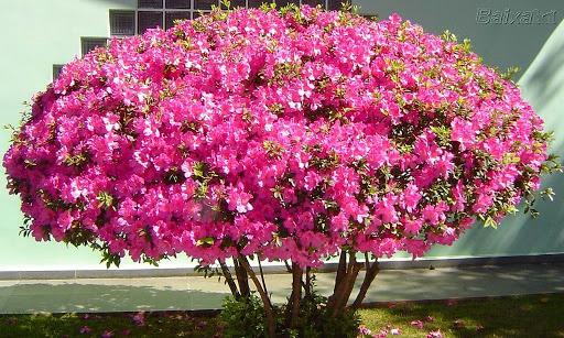 ab84a2146 ... nas plantas de outono; de por ordem em seu jardim, e deixar tão bonito  quanto às outras estações. São muitas as flores que surgem nesta época, ...