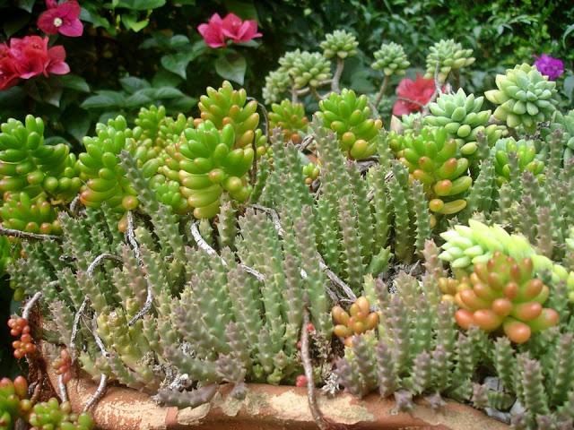 plantas de jardim que gostam de umidade : plantas de jardim que gostam de umidade:minha dica planejamento quando for plantar transplantar plantar