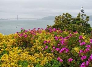 Golden Gate vista da ponte da ilha