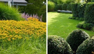 massa de flores amarelas